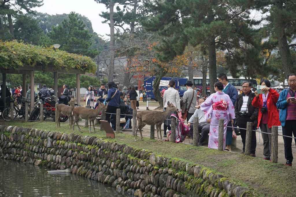 Menschen_Hirsche_Kimono_Nara