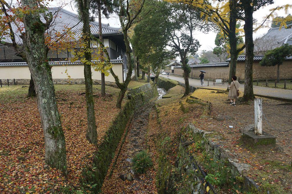 Laub_Natur_Bäume