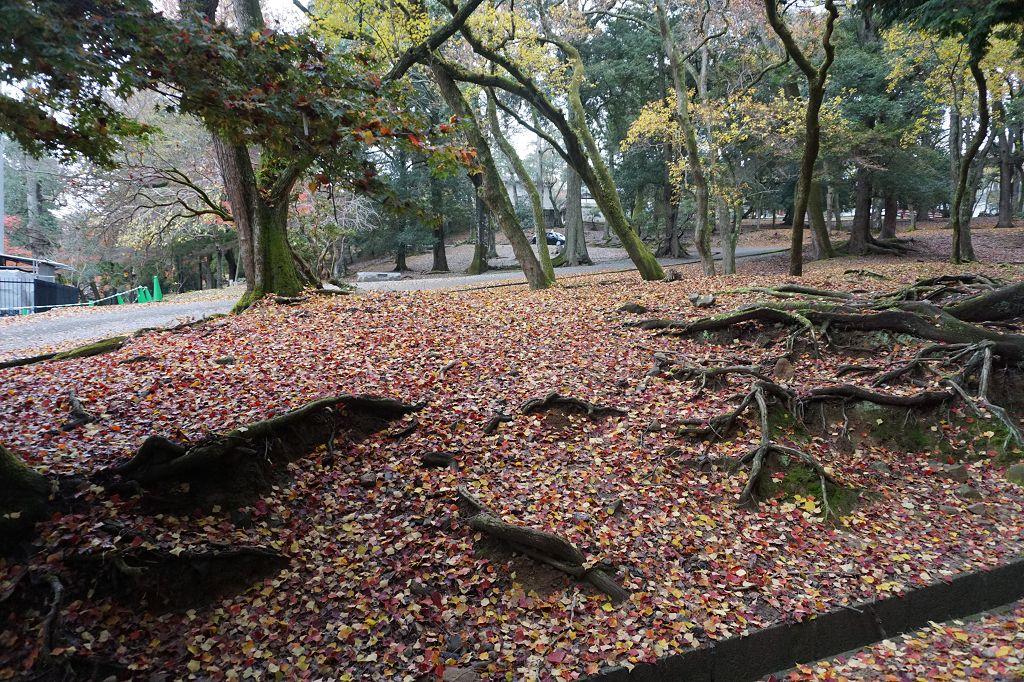 Laub_Bäume_Natur