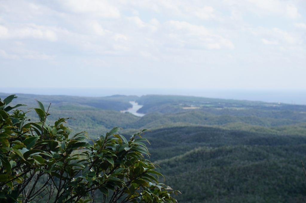 Fluss_Natur_Wald