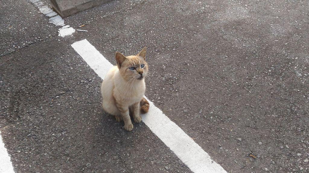 Katze_Strasse