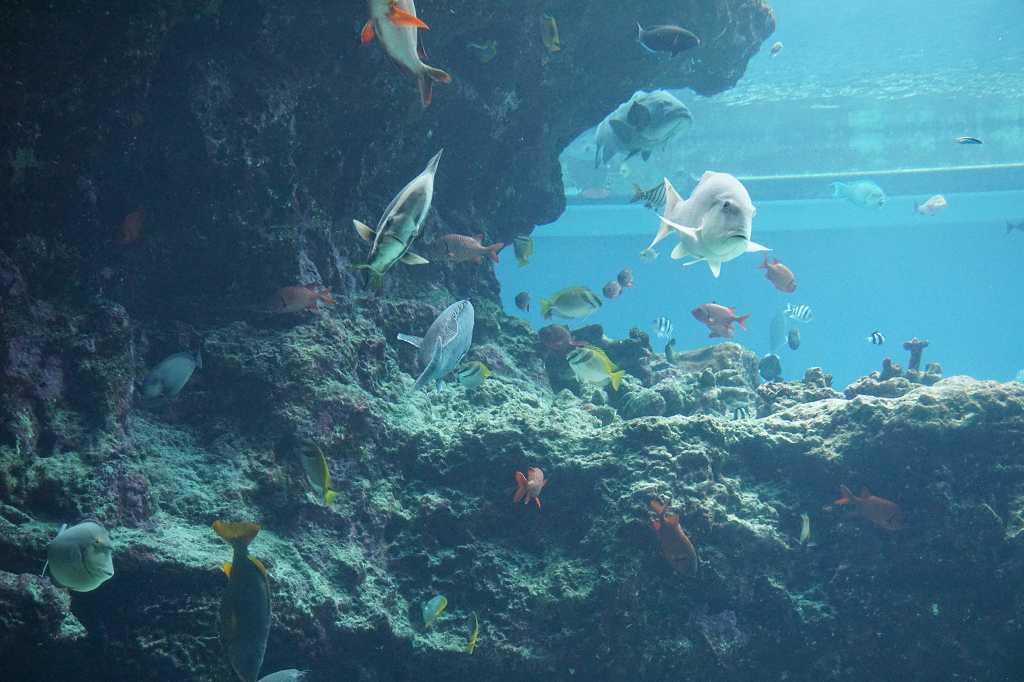Unterwasser_Fische_Meerestiere_Aquarium