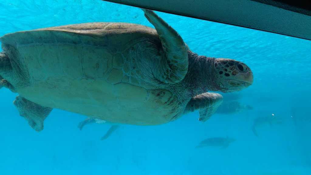 Wasser_Schildkröte